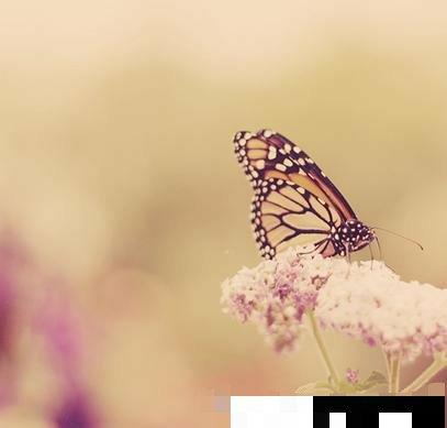 Photoshop软件三种适合新手的快速调色法